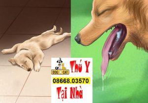 Nguyên nhân gây bệnh Care & Pravo ở chó
