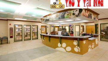 Bệnh Viện Thú Y - Phòng Khám Thú Y