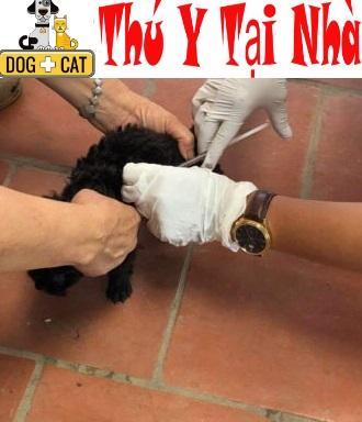 Dịch vụ tiêm phòng chó mèo tại nhà ở Hà Nội