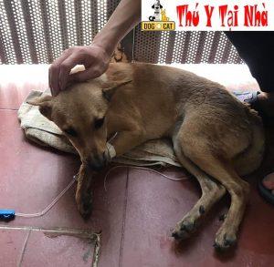 phòng và điều trị bệnh care & pravo cho chó