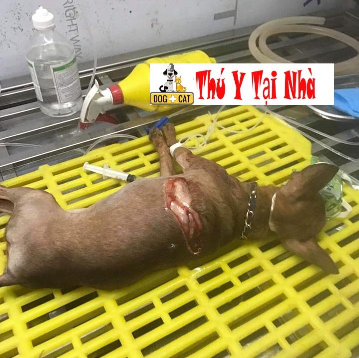Dịch Vụ Tiểu Phẩu Đại Phẫu Các Chấn Thương Của Chó Mèo