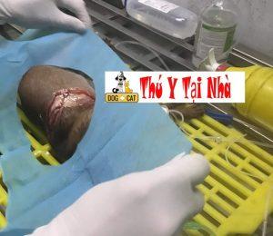 Dịch Vụ Tiểu Phẩu Đại Phẫu Các Chấn Thương Của Chó Mèo 2