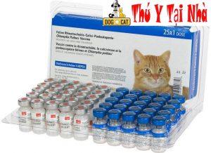 vắc xin phòng bệnh cho mèo