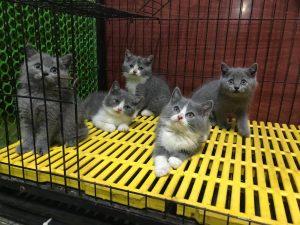 nuôi dưỡng mèo cái