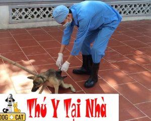 tiêm phòng dại định kỳ cho chó