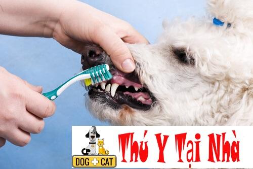 Bệnh viêm miệng do nấm ở chó mèo