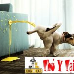 Chó nhà bạn hay Đi vệ sinh bừa bãi và cách huấn luyện chó đi vệ sinh đúng chỗ