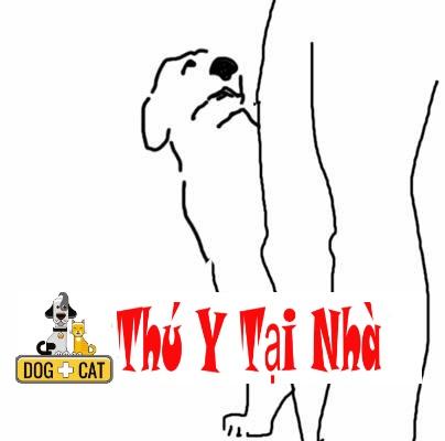 Dạy chó đi cạnh chủ khi dắt dây xích