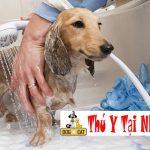 Khi nào thì nên tắm cho chó?
