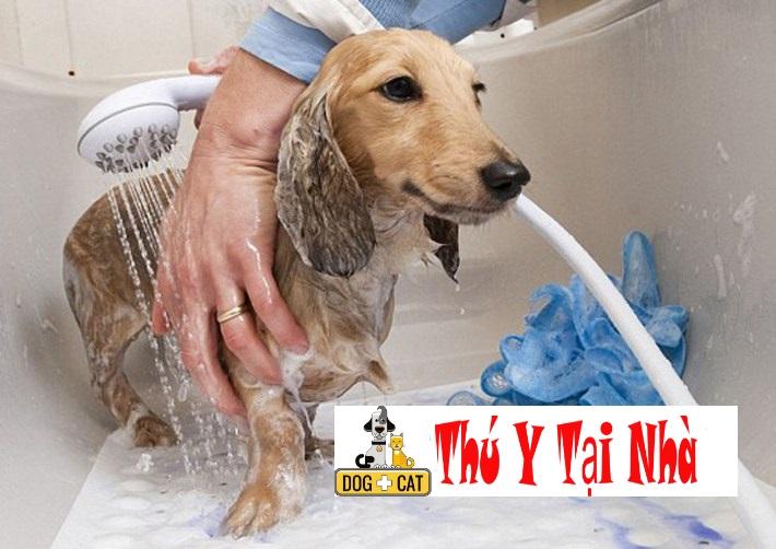 Khi nào thì nên tắm cho chó
