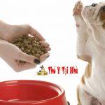 Tẩy giun cho chó và Phương pháp cho chó uống thuốc dễ dàng