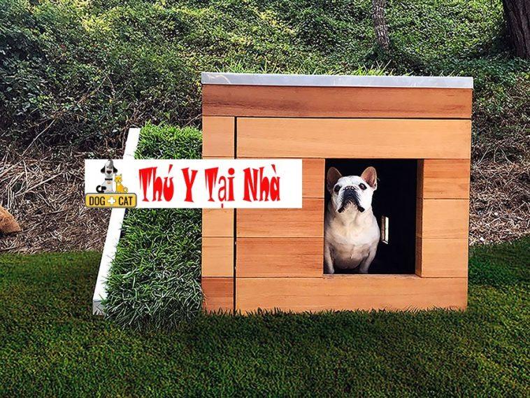 Thiết kế nhà ở cho cún cưng của bạn
