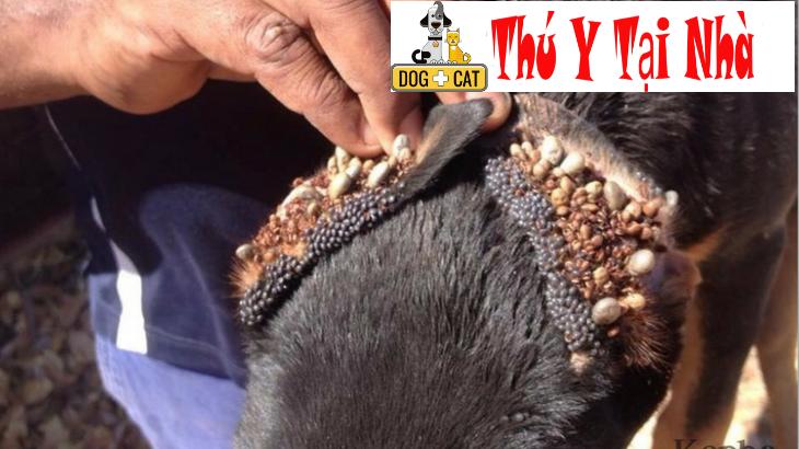 bệnh bọ chét ký sinh ở chó mèo