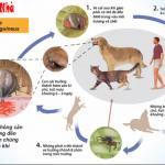 Bệnh ve kí sinh ở chó mèo