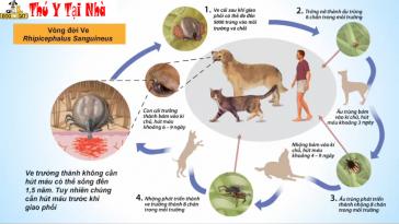 bệnh ve ký sinh ở chó mèo
