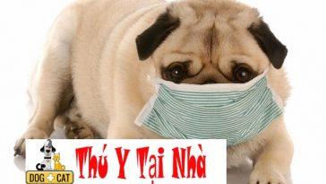 bệnh viêm phổi ở chó