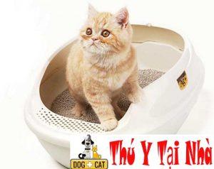 cách dạy mèo đi vệ sinh đúng cách