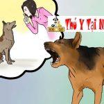 Chó sủa nhiều gặp ai cũng sủa làm thế nào để ngăn chó sủa