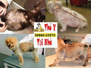 bệnh viêm da ở chó mèo