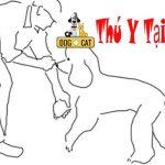 Dạy chó đi bằng ba chân