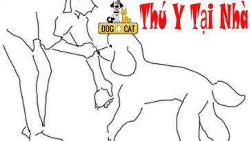 dạy chó đi bằng 3 chân