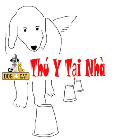 dạy chó đi hình zic zắc qua chướng ngại vật