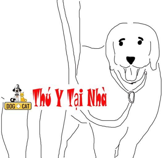 dạy chó lệnh sát chân