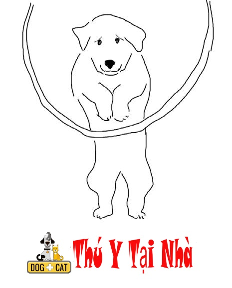 dạy chó nhảy qua một vòng tròn
