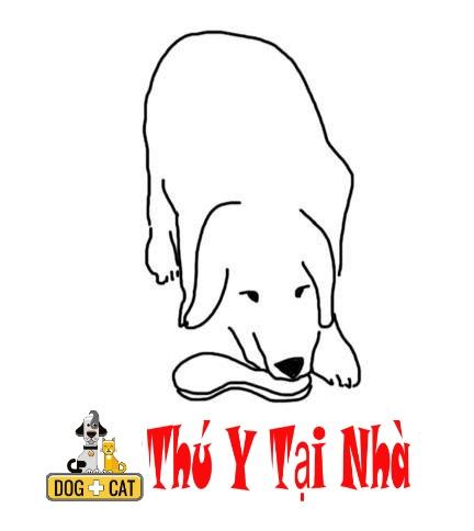 dạy chó nhặt đồ