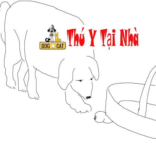dạy chó tìm đồ vật