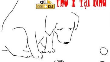 dạy chó tìm hiểu tên các đồ vật