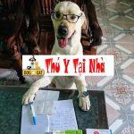 Dạy chó làm phép tính toán