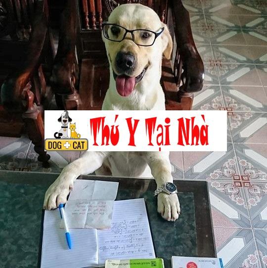 dạy con chó làm phép tính toán