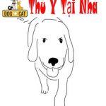 """Dạy con chó lệnh """"Yên"""""""