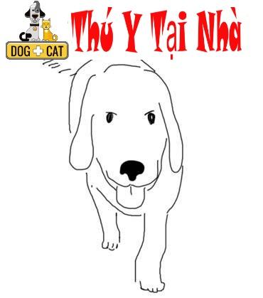 dạy con chó lệnh yên