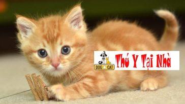 Khi nào nên bắt mèo con về nhà mới ?