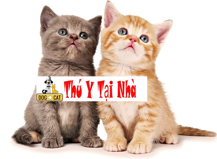 những thuận lợi và bất lợi của việc nuôi hai con mèo con
