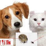 Bệnh rận ký sinh ở chó mèo