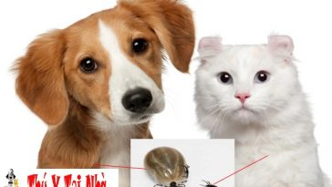 rận ký sinh ở chó mèo