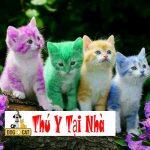 Tìm hiểu về các loại mèo con và kiểu lông
