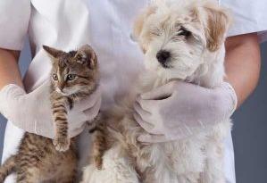 Bảng giá khám chữa chăm sóc bệnh thú y chó mèo tại nhà