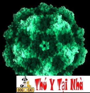 hình ảnh virus gây bệnh pravo ở chó