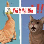 Nên chọn mèo con giống đực hay giống cái ?