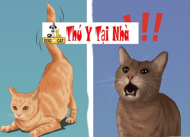 xác định mèo con giống đực hay cái