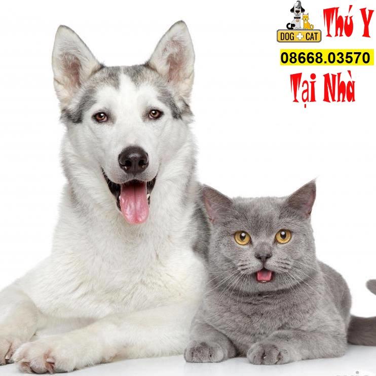 Điều trị chó mèo con tiêu chảy tại nhà