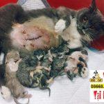 Nguyên nhân gây sảy thai ở chó mèo trong mùa hè