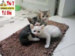 các bé mèo tháng 4,5,6