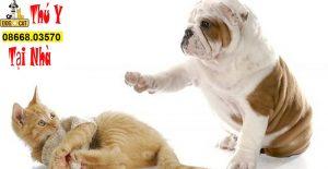 hình ảnh chó mèo bị mắc bệnh xương khớp phải bó bột