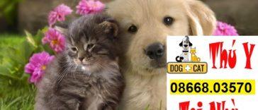 các bệnh thường gặp ở chó mèo và cách điều trị hiệu quả