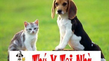 Nguyên nhân, cách phòng các bệnh đường hô hấp và tiêu hóa cho chó mèo con